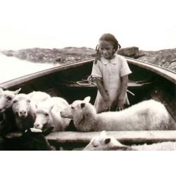 Lampaita veneessä