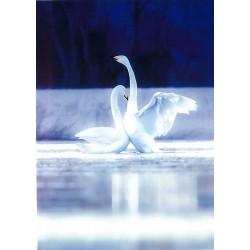 Sininen ja valkoinen