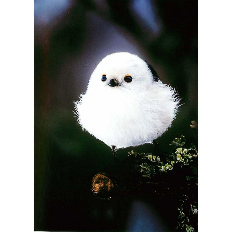 Lintu vai lumipallo